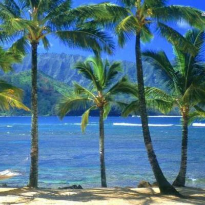 Web-Beaches-Palm-Hawaii